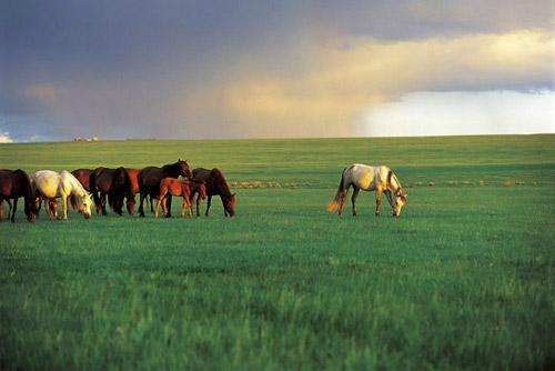 シラムレン草原