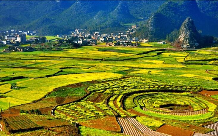 貴陽発万峰林、羅平の菜の花2日間観光