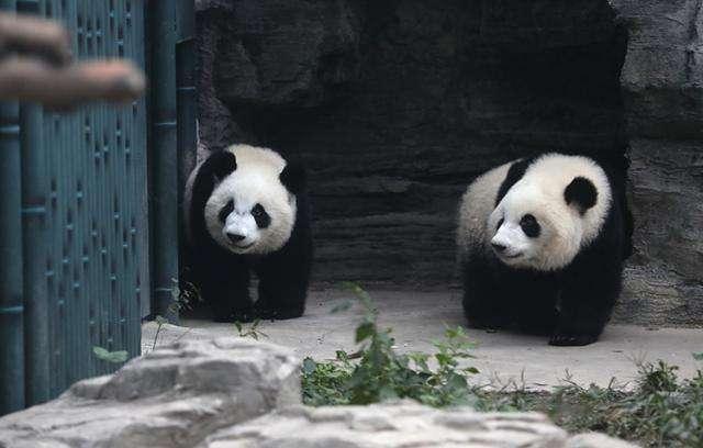 北京動物園の新メンバー